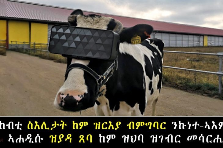 Russian-dairy-farmers-give-cows-VR-goggles-hoping-for-happier-herd-and-more-milk